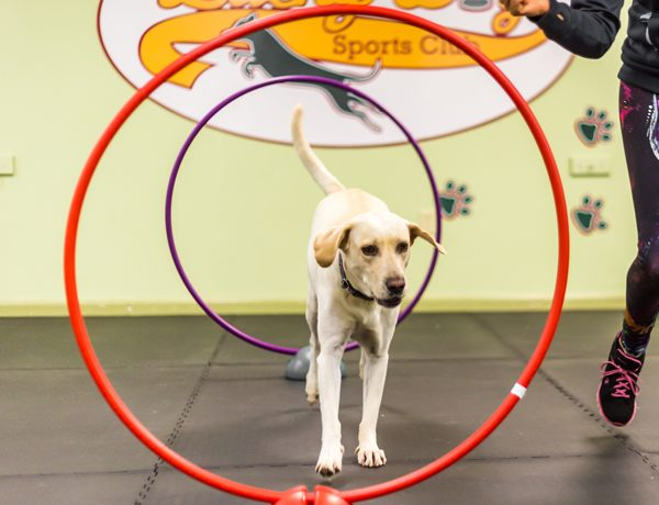 Fido Fun & Games: Agility Edition