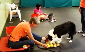 Fido Fun & Games (& Tricks!)