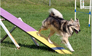 Intermediate Agility(Level 4)
