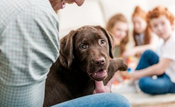Good Pup! Live Virtual Life Skills Class